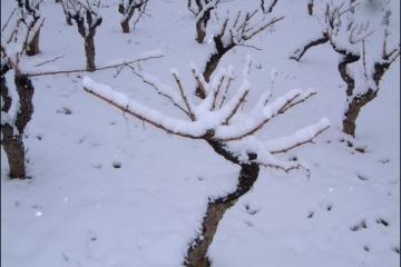 hiver09g