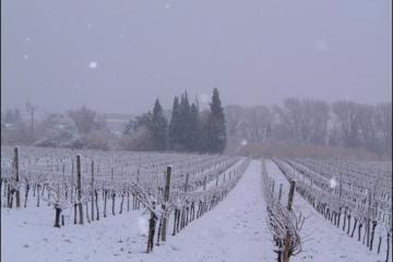 hiver11g